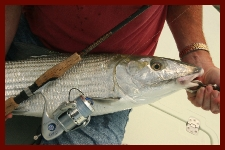 bonefish on spinning tackle